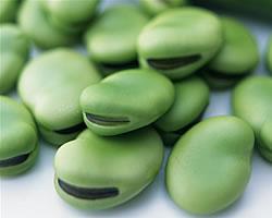 チラシ作り方08:レイアウトの コツは「そら豆?!」